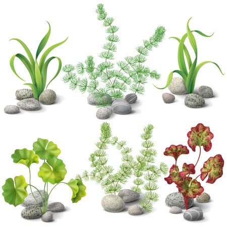 Illustration pour Different kinds of algae and pebbles set isolated on white. - image libre de droit