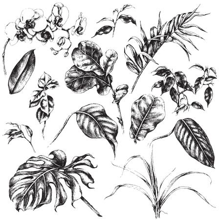Illustration pour Hand drawn branches and leaves of tropical plants. - image libre de droit