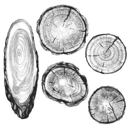 Round and oval cross section of tree trunk. Wooden texture with tree rings. Hand drawn gray  tree trunk rings isolated on white.
