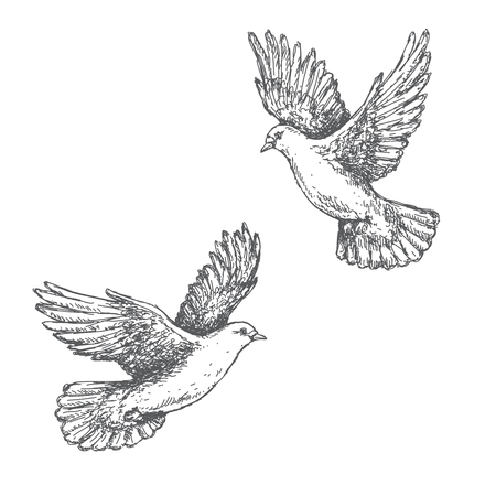 Ilustración de Hand drawn pair of flying doves isolated on white background. Black and white image. Two pigeons vector sketch. - Imagen libre de derechos