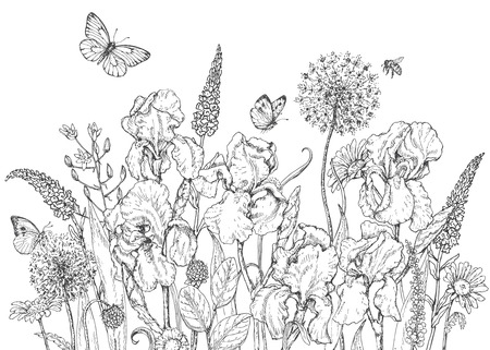 Illustration pour Hand drawn line illustration with iris, wildflowers and insects. Black and white doodle wild flowers, bees and butterflies. Monochrome floral elements. Coloring page. Vector sketch. - image libre de droit