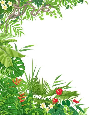 Illustration pour Colorful leaves and flowers of tropical plants background with space for text. Vertical side border made with monstera, fern, palm fronds, liana branches. Tropic rainforest foliage frame.  - image libre de droit