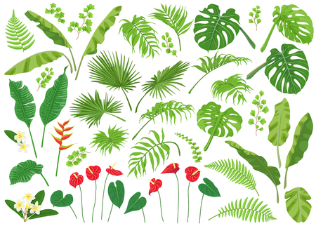 Illustration pour Vivid tropical flowers and green leaves isolated on white background. Tropic plant big set.  Vector flat illustration. - image libre de droit