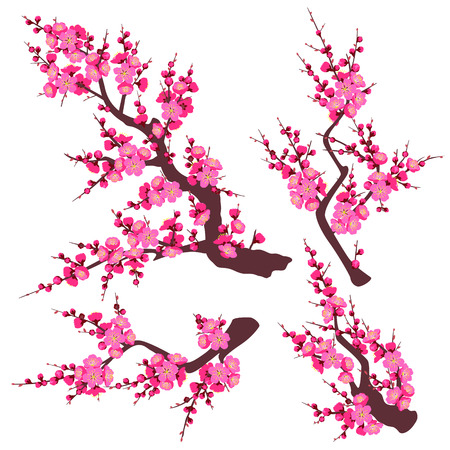 Illustration pour Set of flowering tree branch with pink flowers isolated on white background.  Plum blossom is a symbol for spring and decoration for Chinese New Year. Vector flat illustration. - image libre de droit