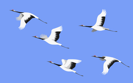 Illustration pour Simplified image of flying japanese storks isolated on colored background. Red-crowned cranes in blue sky side view. Bird flight flat illustration. - image libre de droit