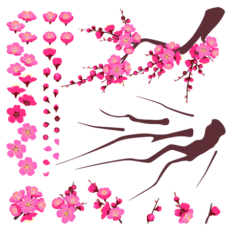 Illustration pour Separate elements of plum blossoming isolated on white. Branch and pink flower set. Spring floral decoration for Chinese New Year, springtime celebrations. Vector flat parts of plant for animation. - image libre de droit