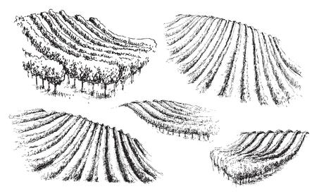 Illustration pour Hand drawn set of hills with vineyards. Monochrome rural scene fragment. Vector sketch. - image libre de droit