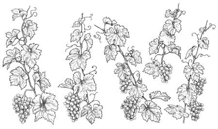Ilustración de Monochrome grapes branches set. Hand drawn grape bunches and leaves isolated on white background. Vector sketch. - Imagen libre de derechos