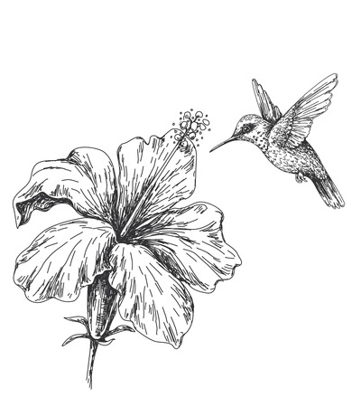 Illustration for Hand drawn monochrome humming bird and hibiscus. Black and white illustration with flying small hummingbird and flower.  Vector sketch. - Royalty Free Image