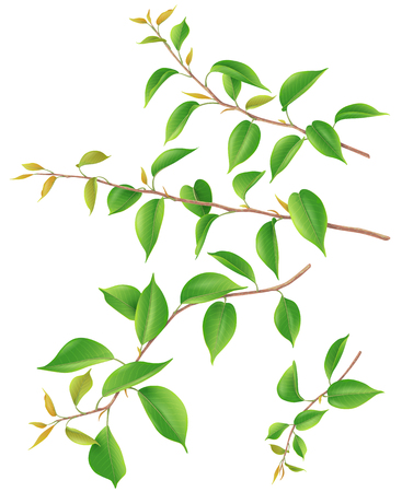 Illustration for Tree branches set with green big and small young leaves isolated on white. Realistic springtime foliage 3d illustration. - Royalty Free Image
