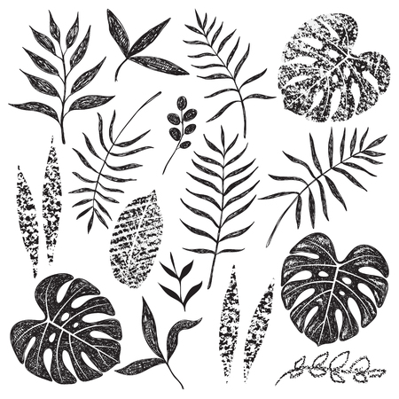 Illustration for Hand drawn tropical leaves set isolated on white background. Palm fronds, monstera and different shapes of plants in black sketch and chalk texture. - Royalty Free Image