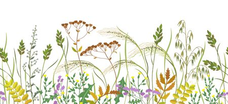 Illustration pour Seamless horizontal border made with wild plants. Meadow grass and wildflowers in row on white background.  Floral natural pattern vector flat illustration. - image libre de droit