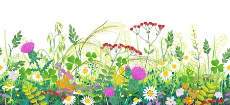 Illustration pour Seamless line horizontal border made with summer meadow plants. Green grass and wild flowers in row on white background.  Floral natural pattern vector flat illustration. - image libre de droit