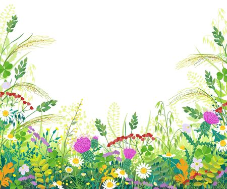 Illustration pour Horizontal border with summer meadow plants. Green grass, colorful flowers, wild cereals ears on white background with space for text. Floral natural summertime background vector flat illustration. - image libre de droit