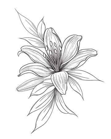 Illustration pour Hand drawn lily flower, bud and leaves isolated on white. Vector monochrome elegant floral composition in vintage style, tattoo design, coloring page, wedding decoration. - image libre de droit