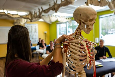 Foto de A close up view on the hands of a tutor giving an anatomy class, using a model skeleton showing the spine and neck, with blurry students in background - Imagen libre de derechos
