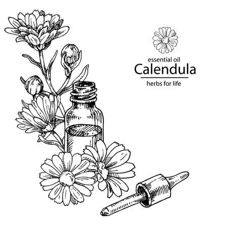 Illustration pour Opened calendula oil glass bottle with dropper. For cosmetics, medicine, treating, aromatherapy, package design healthcare. - image libre de droit