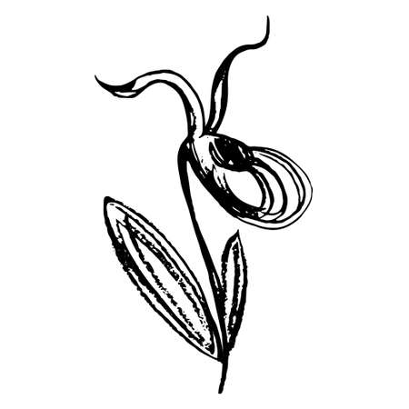 Illustration for Children's flower page coloring book Vector doodle flower sketch taiga orchid venus slipper. Black outline illustration, drawing isolated on a white background, drawn by hand. - Royalty Free Image