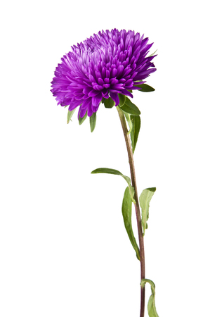 Photo for flowers are isolated on a white background - Royalty Free Image