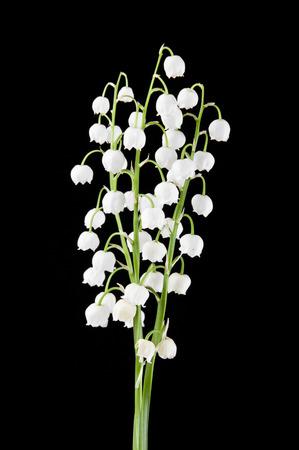 Foto de flowers lilies of the valley on black background - Imagen libre de derechos