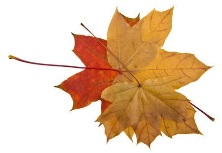 Photo pour Autumn leaves isolated on white background close up - image libre de droit