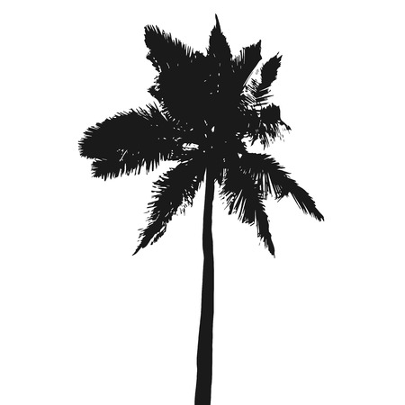 Coconut palm tree silhouette isolated on a white background. Vector illustration.