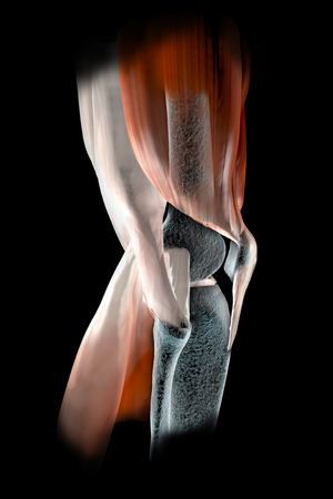 Knee ligaments, tendons, bones, muscles x-ray