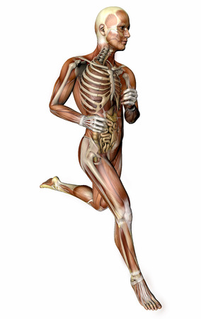3d person running with muscles and internal organs in transparency
