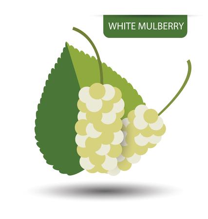 Illustration pour White mulberry vector illustration - image libre de droit