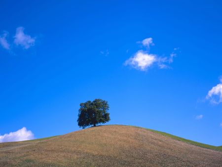 Lonely tree at a hill top