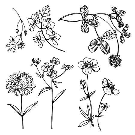 Illustration pour Herbs and flowers vector line drawing. - image libre de droit