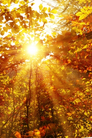 Autumn Forest With Trees And Yellow Leaves With Bright Sun