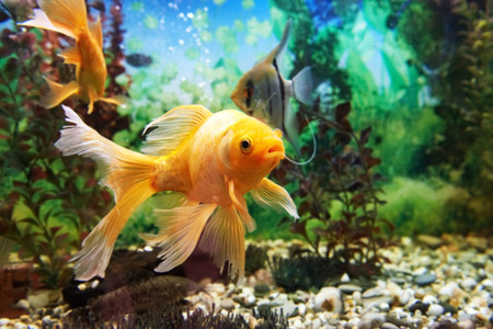 Foto de Tropical colorful fishes swimming in aquarium with plants - Imagen libre de derechos