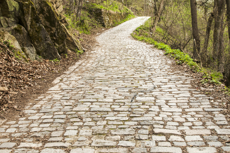Stone paved mountain road in forest in springtime sunless day