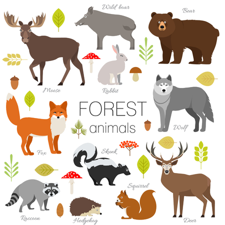 Illustration pour Set of forest animals isolated vector. Moose, wild boar, bear, fox, rabbit, wolf skunk raccoon deer squirrel hendgehog - image libre de droit
