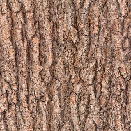 Foto de seamless bark tree texture - Imagen libre de derechos