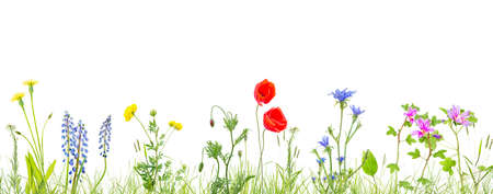 Photo pour grass and wildflowers isolated background - image libre de droit
