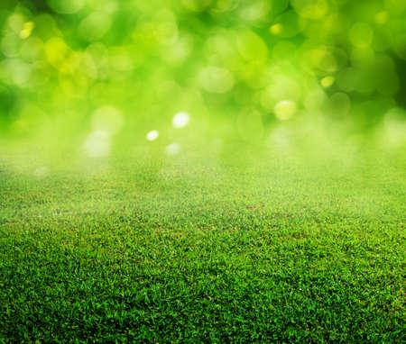 Foto de spring green grass background - Imagen libre de derechos