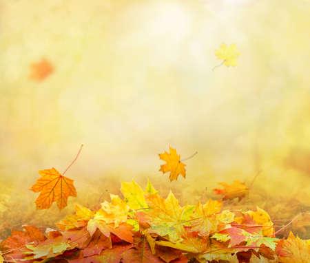 Foto de pile of autumn leaves in park, abstract background - Imagen libre de derechos