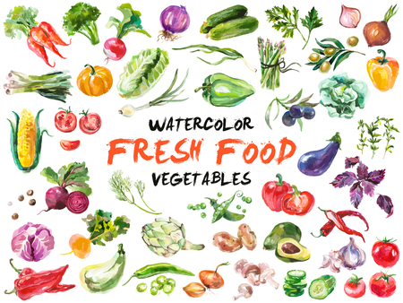Ilustración de Watercolor painted collection of vegetables. Hand drawn fresh food design elements isolated on white background. - Imagen libre de derechos