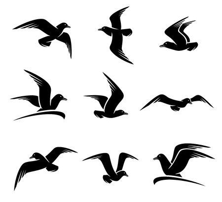 Seagull set.