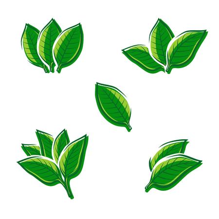 Tobacco leaf set. Vector illustration