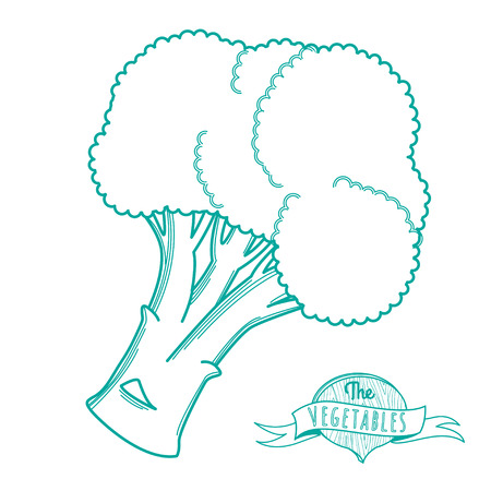 Vector illustration Outline hand drawn sketch of broccoli (flat style, thin  line)