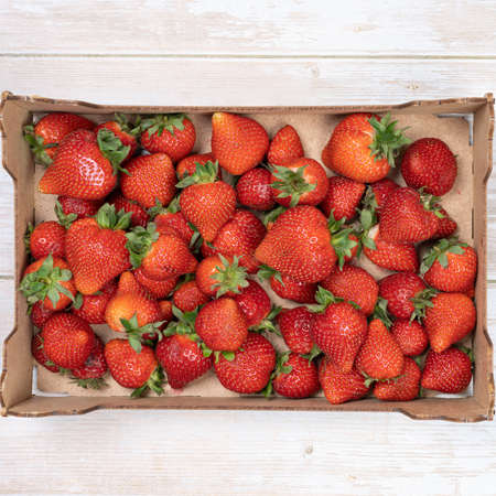 Photo for ripe, red strawberries in a box, top view. Summer concept, harvesting - Royalty Free Image