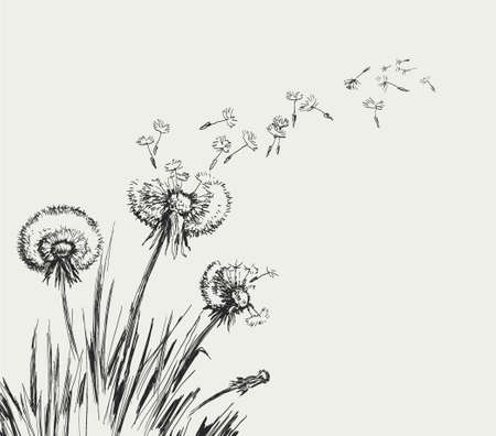 Illustration pour Dandelion, Flying Seeds of Dandelion Hand Drawn Illustration isolated on white Background - image libre de droit