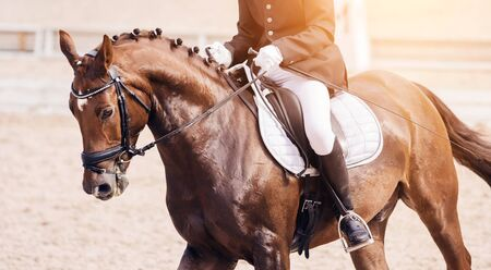 Photo pour A beautiful Bay horse with a braided mane and a rider in the saddle gallops across the sandy arena, illuminated by sunlight. - image libre de droit