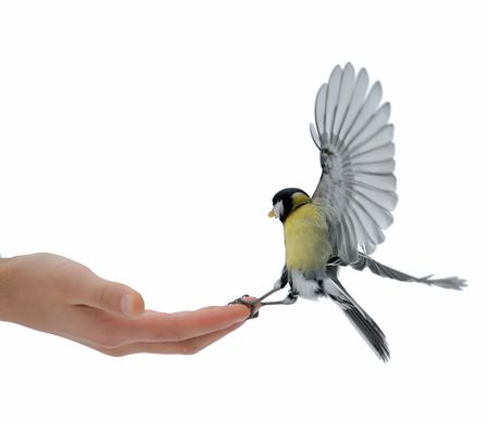 Foto de The titmouse takes sunflower seeds from a hand of the boy. - Imagen libre de derechos
