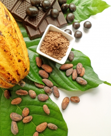 Cocoa fruit with beans, powder, and chocolates arranged on top of green cocoa leaves