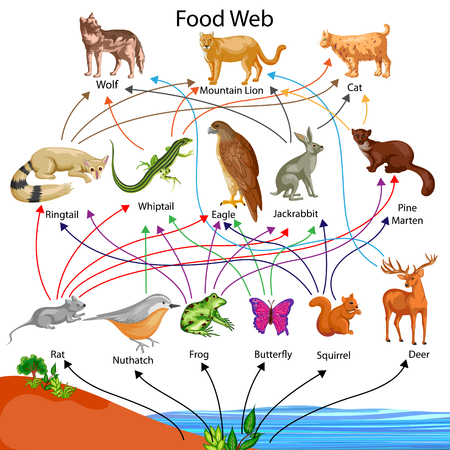 Ilustración de Education Chart of Biology for Food Web Diagram - Imagen libre de derechos