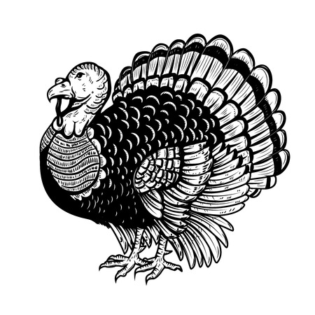 Illustration for Turkey illustration isolated on white background. Thanksgiving theme. Design element for poster, card, banner. Vector illustration - Royalty Free Image